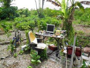 office_niue