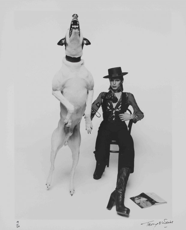 13._Promotional_photograph_of_David_Bowie_for__Diamond_Dogs___1974