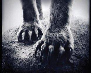 Shearwater: Animal Joy (Sub Pop)