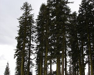 Oregon, USA: Night of the Hunters