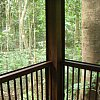 View of the tropical rainforest from a cabin at Coconut Beach Rainforest Lodge, Cape Tribulation in north Queensland, Australia.
