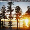 The whispering pines at Manly, Sydney in Australia.