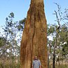 Yep, that's a 9 metre high termite mound (termite tower?) on York Peninsula in Queensland's far north.