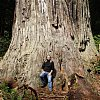 Which is why they are called giant redwoods. In the forest near god-awful Crescent City in Northern California where we spend a year one night. There's a story about my night in a bar there in the Snapshots pages.