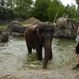 Elephant Polo in Thailand: Days of the Raj remembered (2006)