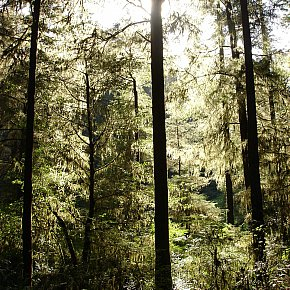 Crescent City, California: Redwoods and dead wood
